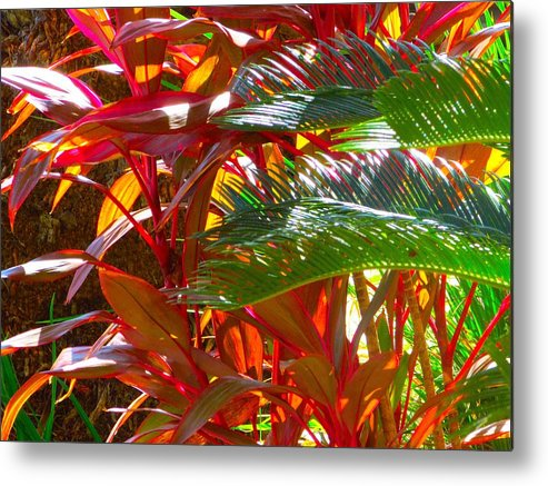 Landscape Plants Metal Print featuring the photograph Highlights by Gayle Price Thomas