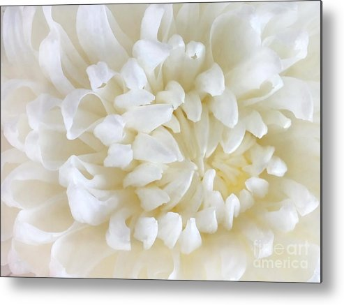 Summer Flower Metal Print featuring the photograph Hint Of Color by Andrea Kollo