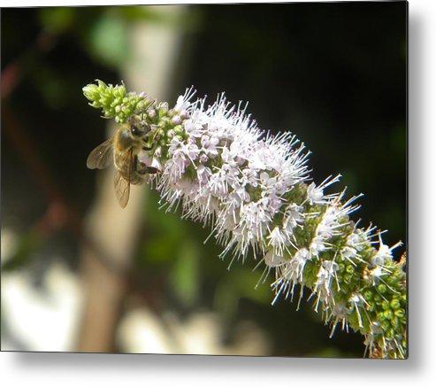 Honey Metal Print featuring the photograph Honey Bee 3 by Eric Johansen