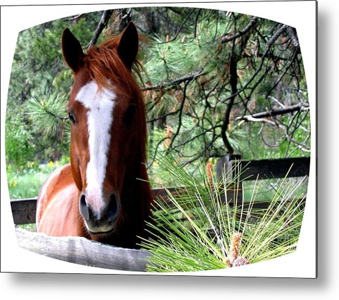 Horse Metal Print featuring the photograph Horse Country by Will Borden