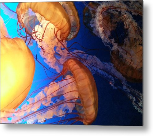 Underwater Metal Print featuring the photograph I'll Take Jelly With That by Caryl J Bohn