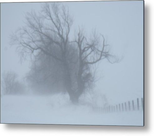 Tree Metal Print featuring the photograph Iowa In February by Jennifer Lesher - Arellano