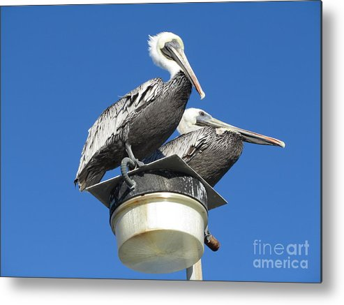 Kathryn Metal Print featuring the photograph Just Resting by Kathryn Smith