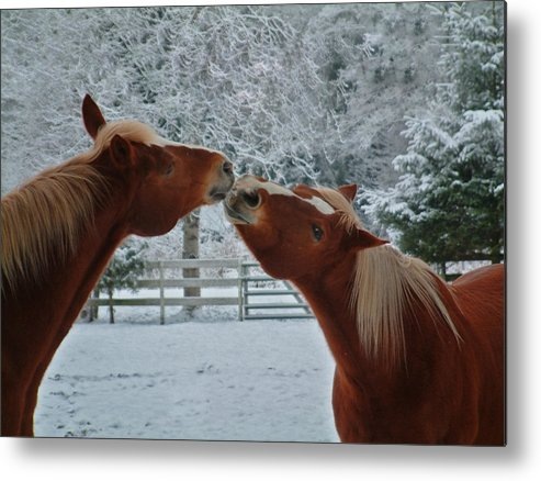 Horse Metal Print featuring the photograph Kisses by Kevan Garecki