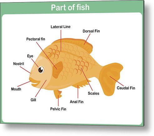 Leaning Parts Of Fish For Kids - Worksheet Metal Print