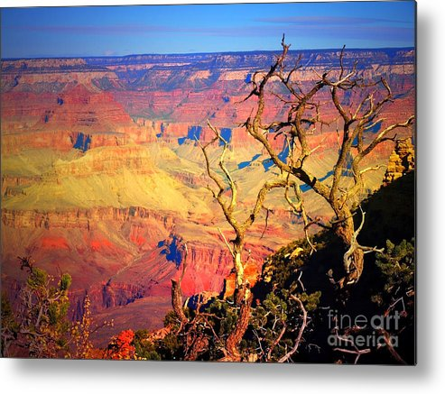 Tree Metal Print featuring the photograph Light In The Canyon by Tara Turner
