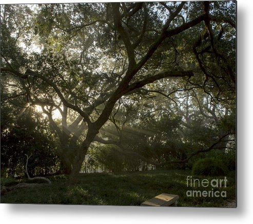 Jefferson Island Metal Print featuring the photograph Live Oak Light Streaming Through Fog by Kelly Morvant