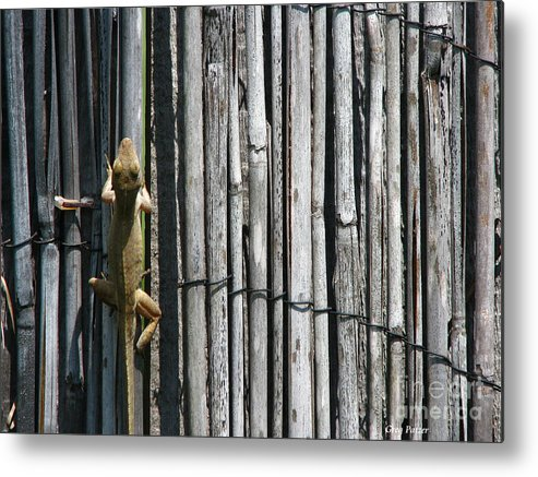 Art For The Wall...patzer Photography Metal Print featuring the photograph Lizard Art by Greg Patzer