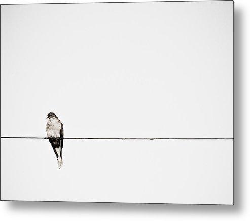 Bird Metal Print featuring the photograph Loner by Ryan Brady-Toomey