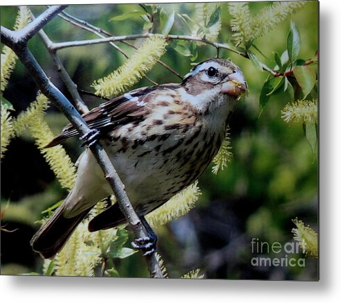 Metal Print featuring the photograph Looking Up by Scott B Bennett