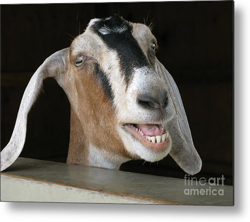 Goat Metal Print featuring the photograph Maa-aaa by Ann Horn