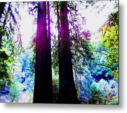 Muir Woods National Monument Metal Print featuring the photograph Magical by Cathleen Cario-Reece