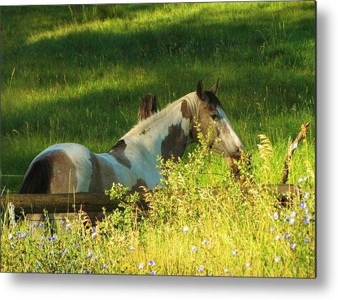 Horse Metal Print featuring the photograph Meet Me At The Fence by Feva Fotos