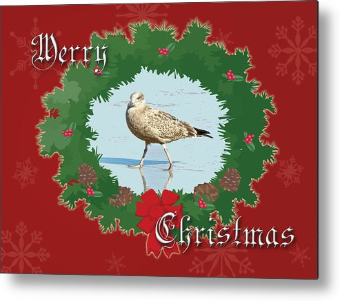 Christmas Metal Print featuring the photograph Merry Christmas Greeting Card - Young Seagull by Mother Nature