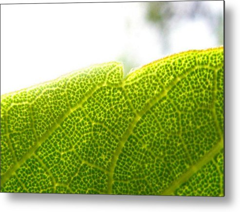 Leaf Metal Print featuring the photograph Micro Leaf by Rhonda Barrett