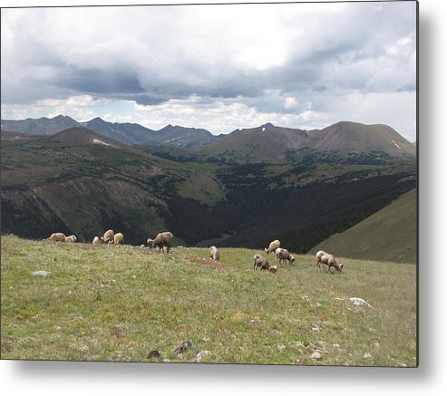 Bighorn Sheep Metal Print featuring the photograph Mountain Landscape With Bighorn Sheep by Sarah Tanksalvala