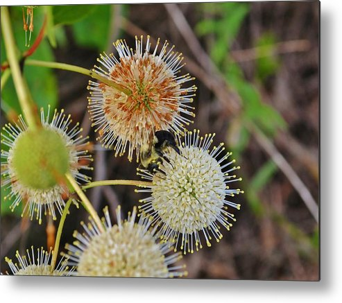 Flower Metal Print featuring the photograph Nature's Delicate Orbs by Paul Hennrich