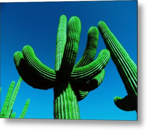 Catus Neon Colors Green Blue Metal Print featuring the photograph Neon Catus by Todd Sherlock