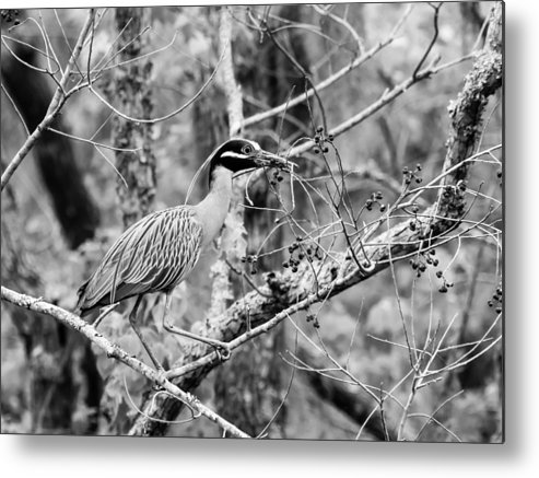 Animal Metal Print featuring the photograph Nester by Ronnie Cole