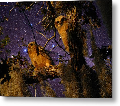 Phil Metal Print featuring the photograph Night Owls by Phil Penne