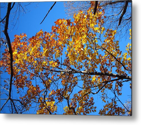 Old Metal Print featuring the photograph Old Rag Hiking Trail - 121218 by DC Photographer