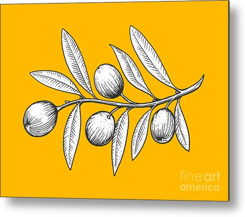 Engraving Metal Print featuring the digital art Olive Branch Engraving Style Vector by Alexander p