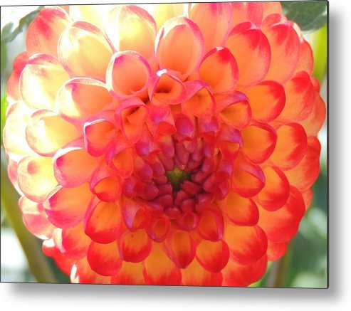 Nature Metal Print featuring the photograph Orange Center by Lucy Howard
