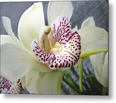 Orchid Metal Print featuring the photograph Orchid by Ann Powell