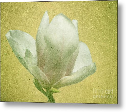 Bloom Metal Print featuring the photograph Outer Magnolia by Jeffrey Kolker