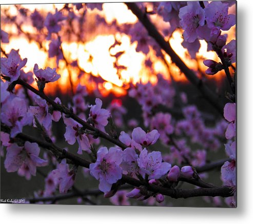Peach Metal Print featuring the photograph Peachy Sunset 3 by Nick Kirby