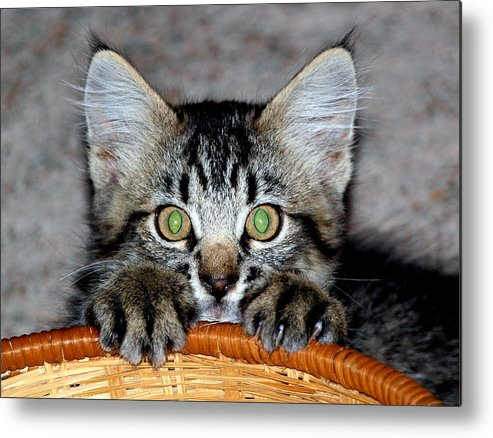 Metal Print featuring the photograph Peek by Heather Farr