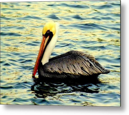 Pelicans Metal Print featuring the photograph Pelican Waters by Karen Wiles