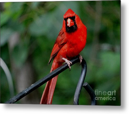 Bird Metal Print featuring the photograph Perched by Scott B Bennett