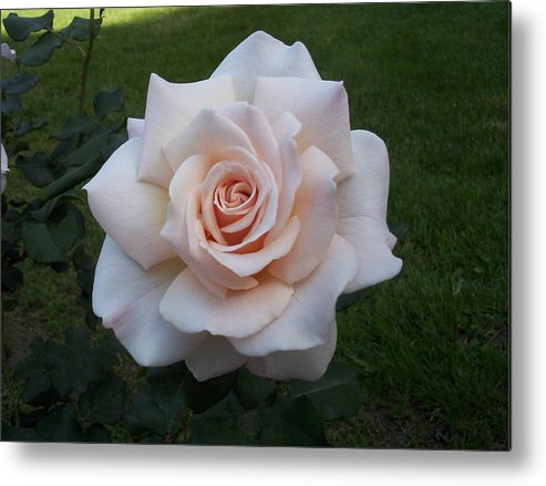 Perfection Metal Print featuring the photograph Perfection by Carol Chatelain