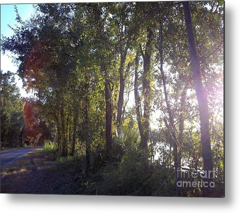Trees Metal Print featuring the photograph Phase One by Sheila James
