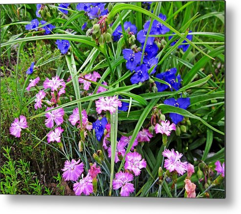 Metal Print featuring the photograph Pink And Blue Garden by MTBobbins Photography