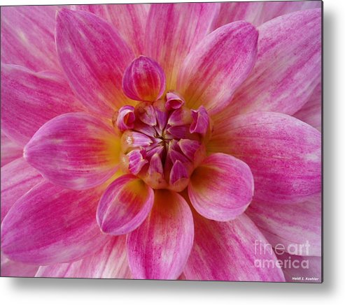 Pink Dahlia Flower Metal Print featuring the photograph Pink Dahlia by H Koehler