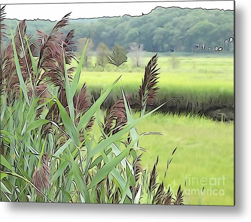 Marsh Metal Print featuring the photograph Plant Life by Phil Campanella