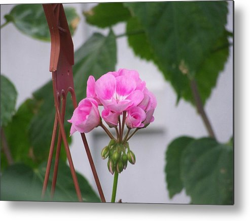 Flowers Metal Print featuring the photograph Pretty In Pink by J Leigh