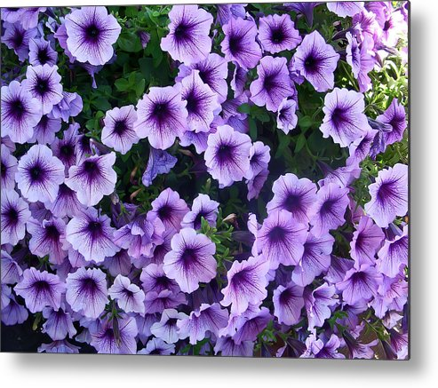Flower Metal Print featuring the photograph Purple Petunias by Aimee L Maher ALM GALLERY