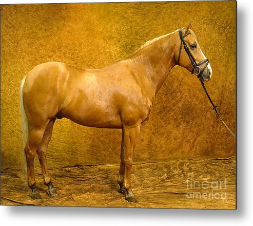 Animal Metal Print featuring the photograph Quarter Horse by Will and Deni McIntyre