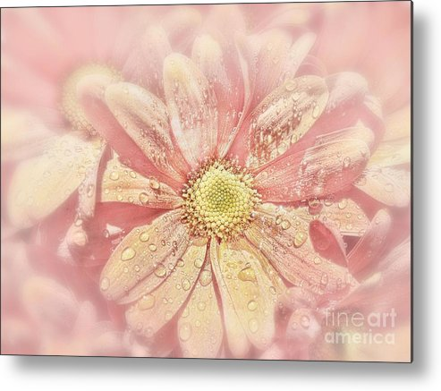 Flower Metal Print featuring the photograph Rainy Days And Sundays by Andrea Kollo