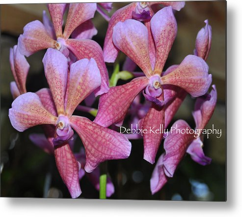 Orchids Metal Print featuring the photograph Rare Orchids by Debbie Kelly