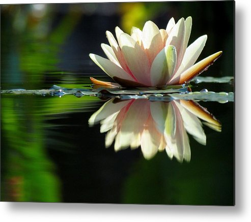 Water Lilies Metal Print featuring the photograph Reaching For The Sun by Carol Montoya