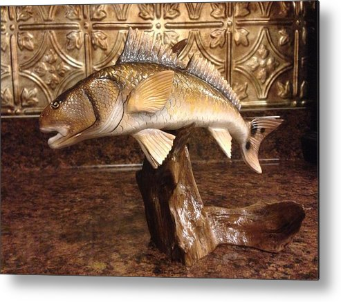Red Drum Metal Print featuring the sculpture Red Fish On A Drift by Jonathan Gatica