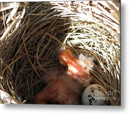 Nest Metal Print featuring the painting Red-winged Blackbird Babies And Egg by J McCombie