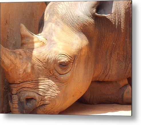 Rhino Metal Print featuring the photograph Rhino Naptime by Virginia Kay White