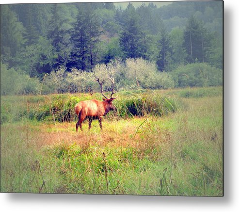 Elk Metal Print featuring the photograph Roosevelt Bull Elk by Joyce Dickens