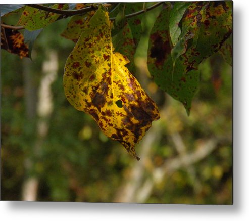 Yellow Metal Print featuring the photograph Rusty Leaf by Nick Kirby