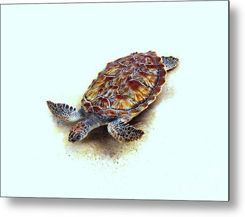 Sea Turtle Metal Print featuring the photograph Sea Turtle II by Ann Powell